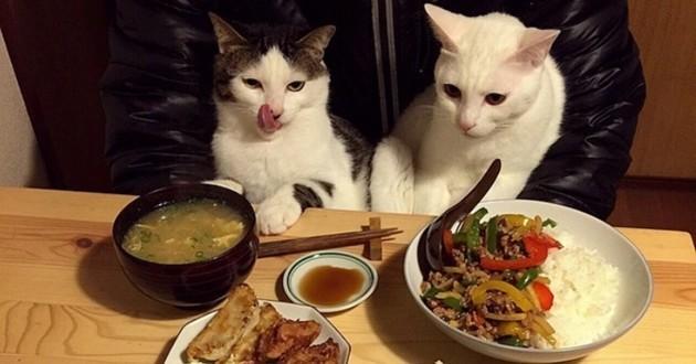 Amusé par les réactions de ses chats à l'heure des repas, un couple de Japonais les a photographiés