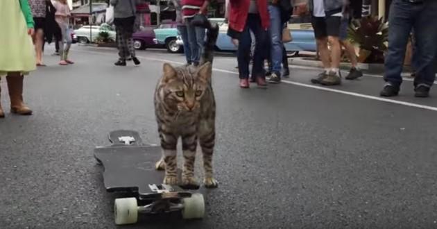 chat qui fait du skate