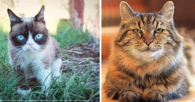 chats aux record incroyables