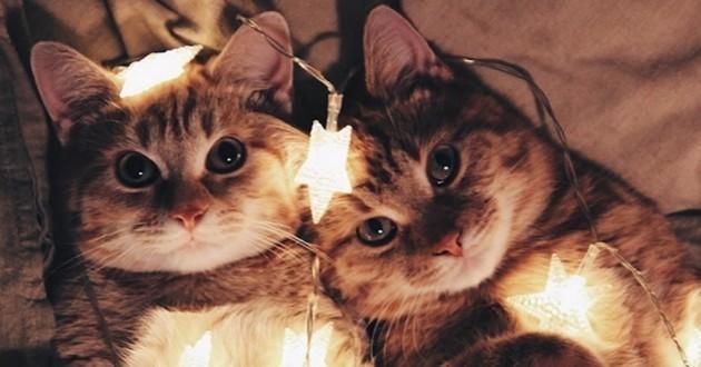 Abandonnés dans un jardin, deux adorables chatons roux ont trouvé leur salut