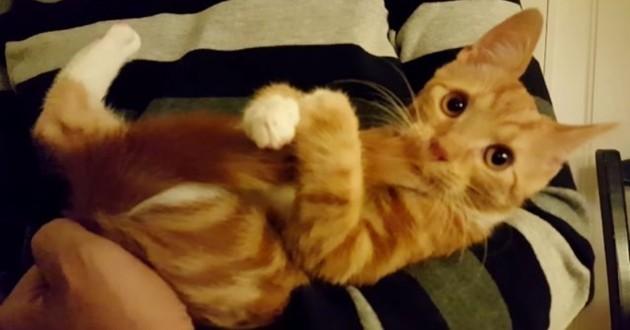 Ce chaton qui se sert de sa queue comme d'une tétine va vous faire fondre !