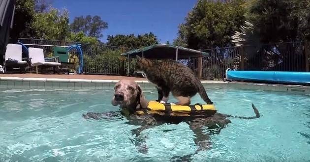 Un drôle de chat prend son ami chien pour une planche de surf