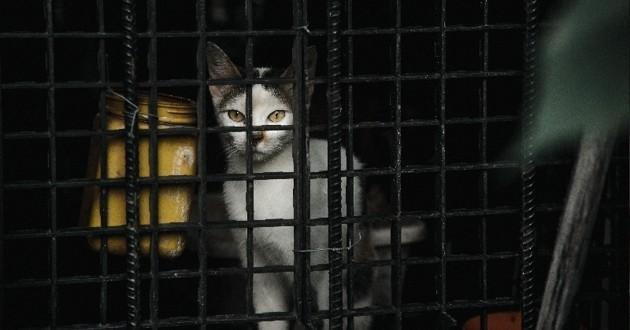 chat emprisonné dans une cage