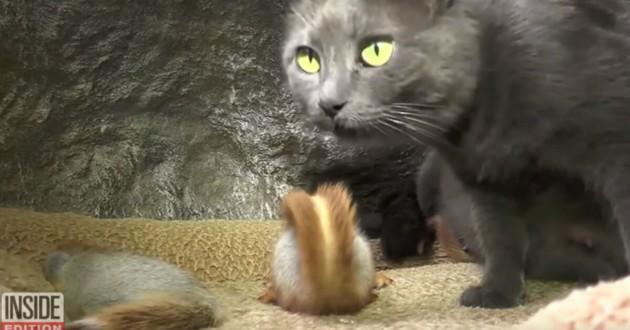 chatte et petit écureuil