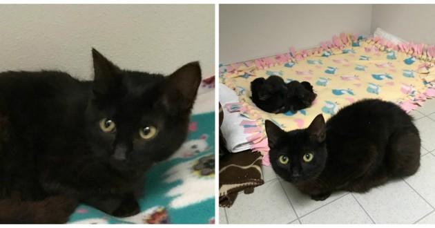 chatte noire