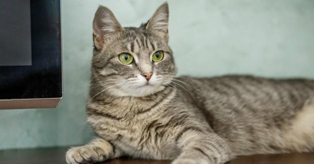 Disparu depuis un an, un chat est rendu à sa propriétaire