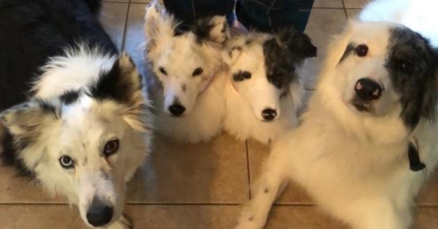 Il est désormais possible de commander des chaussons qui ressemblent à votre chien !