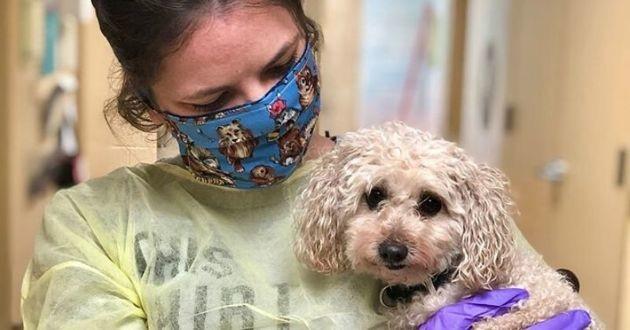 chien de refuge avec un bénévole