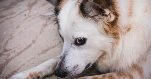 chien blanc triste