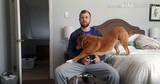 Une chienne avec son maître qui joue aux jeux vidéo