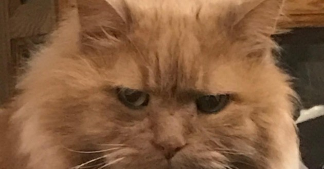 vieux chat adopté chester