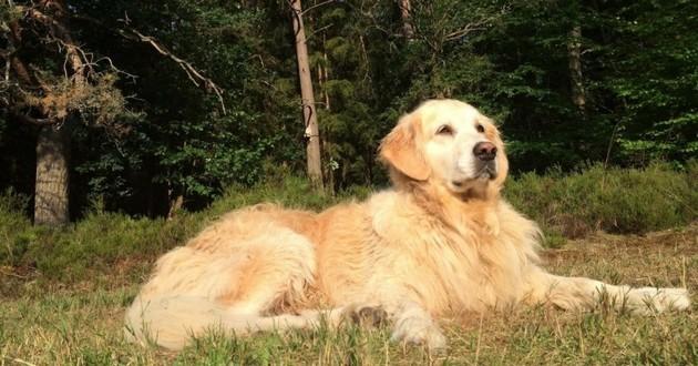 chien empoisonné bois de boulogne