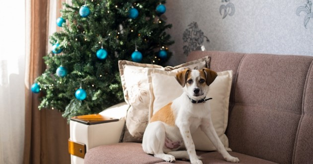 chien à Noël
