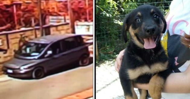 chien abandonné par une voiture