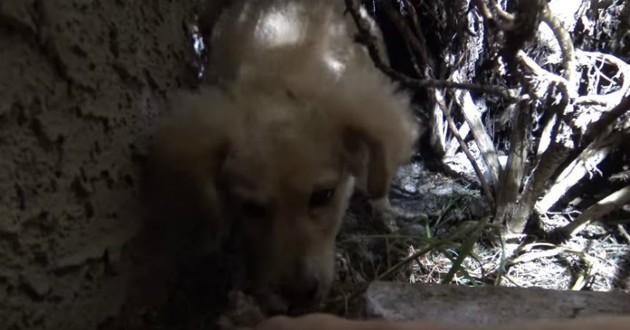 chien abandonné cadeau