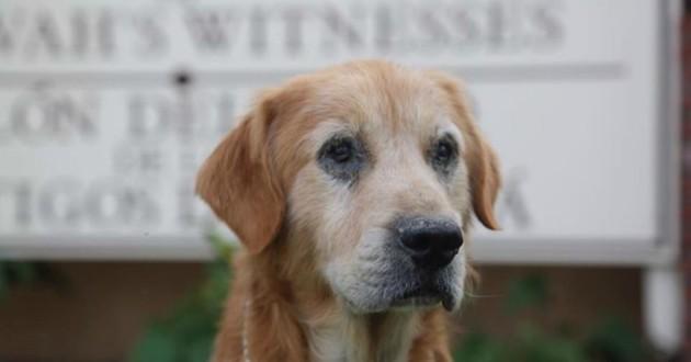 chien abandonné église golden