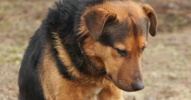 chien abandonné rue
