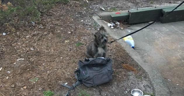 chien abandonné poubelle