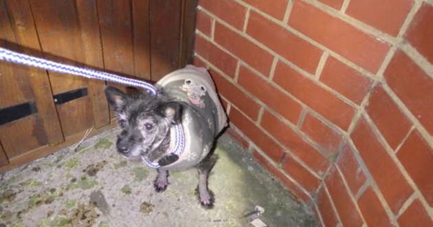 chien abandonné pull noel