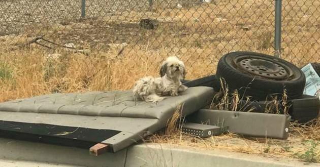 chien pneu route