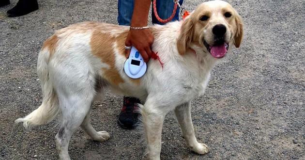 chien abandonné spa