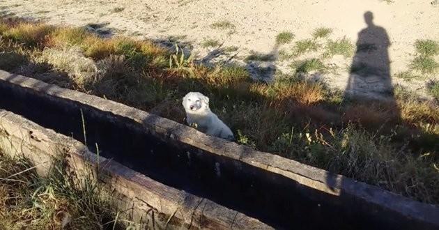 chien abandonné sur le bord de la route