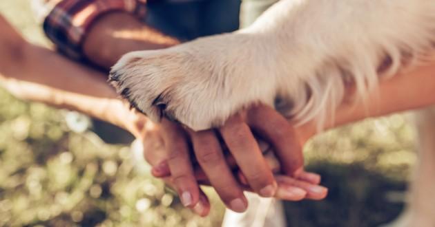 chien amour patte
