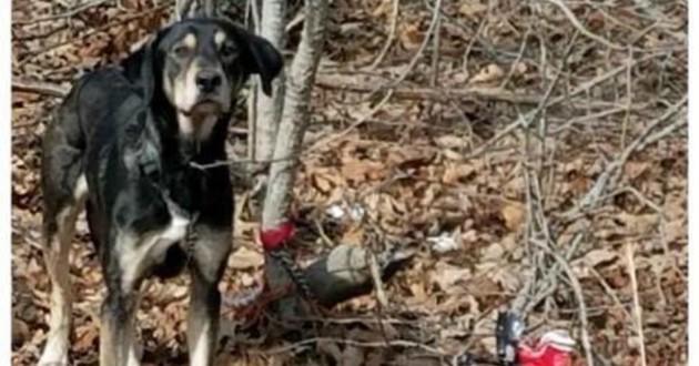 chien attaché arbre