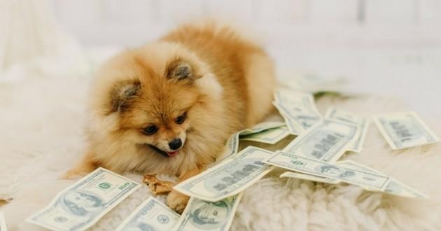 chien argent dollars