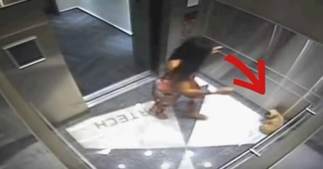chien ascenseur maîtresse
