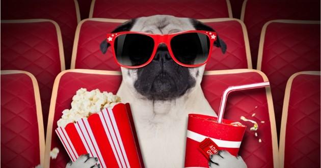 chien au cine