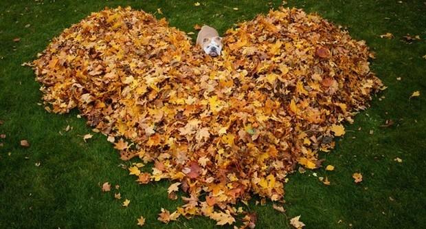 chien automne, chien feuilles mortes