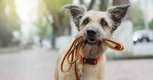 chien qui porte une laisse