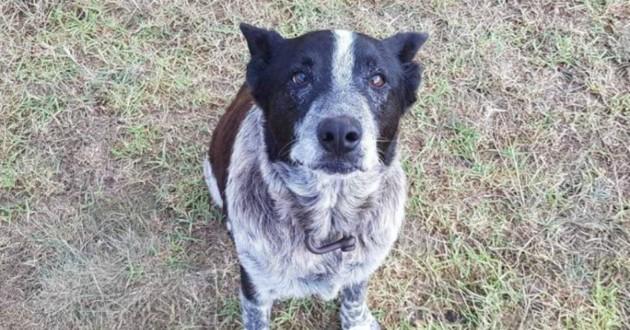 chien aveugle sourd noir et blanc
