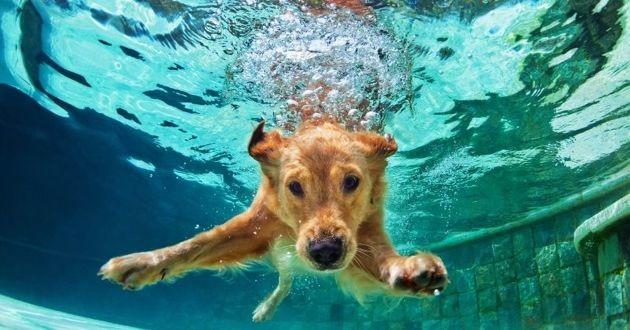 chien qui plonge sous l'eau