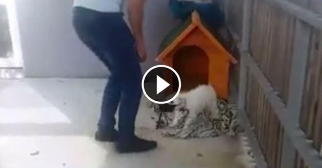 chien balcon sauvé stéphane lamart