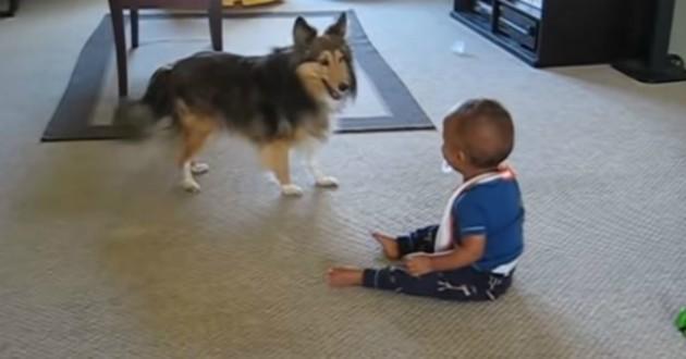 chien avec un bébé