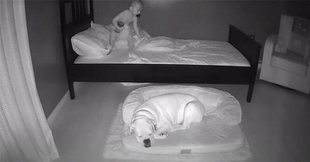 un enfant et un chien qui dorment