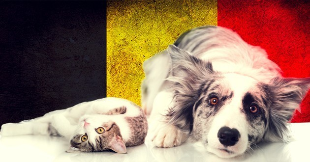 Attentats de Bruxelles : les chats 2.0 au service des forces de l'Ordre