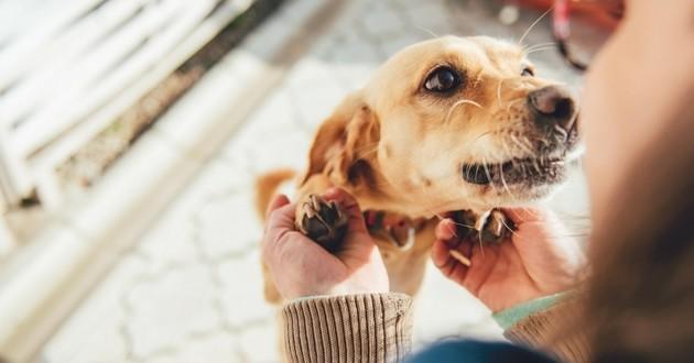 complicité chien maître bien-être