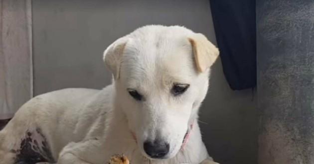 chien blanc eto