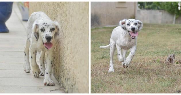 chien blanc euthanasie