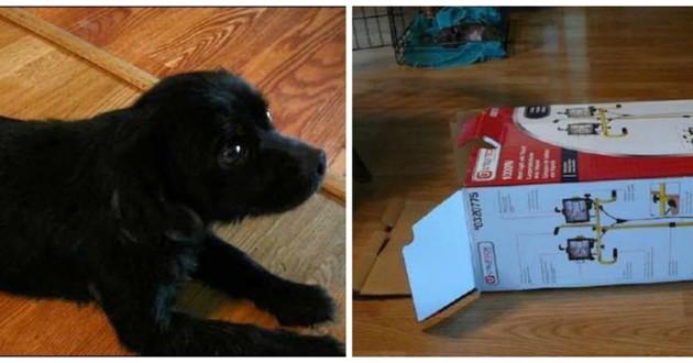 chien boite carton