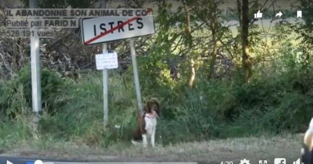 chien sur le bord de la route