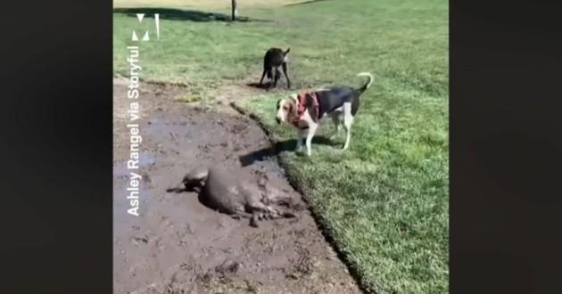 chien qui se roule dans la boue