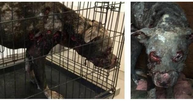 Un chien vivant retrouvé en état de décomposition — HORREUR