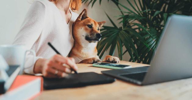 chien bureau