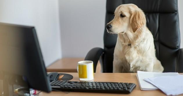 pets at work Purina chien au bureau travail