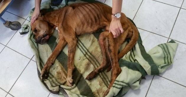 chien cadavérique