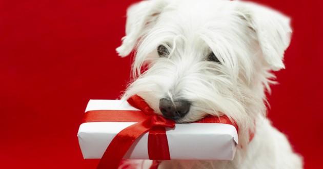 chien idées cadeaux